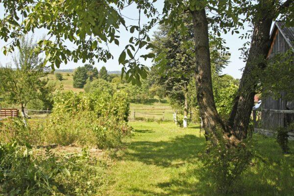 Parajd, a Jékely család kertje