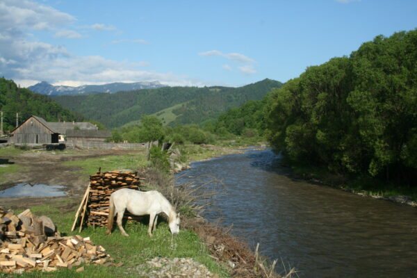 Fehér paripa az egykori tölgyesi határon