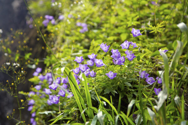 Szívemből kék virágot sarjasztok kedvesen