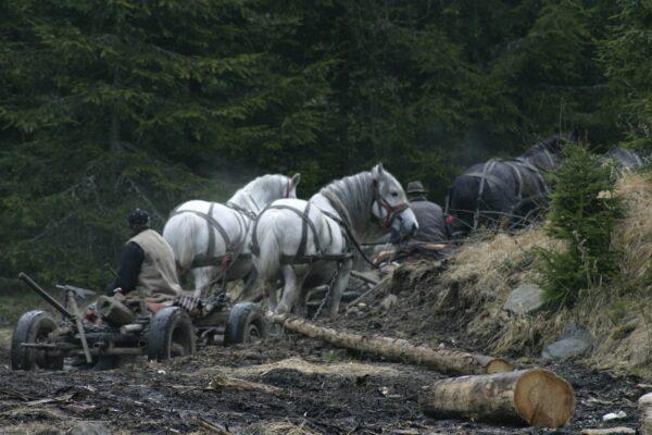 Erdőt, embert, állatot gyötrő világ
