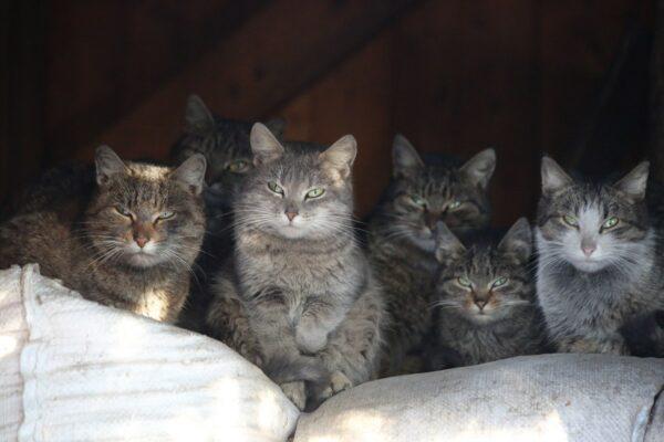 Jól táplált macskacsalád - ahol nagy az szegénység, ott sok az egér