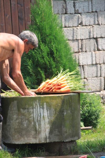 Tisztítják a murkot (sárgarépát)