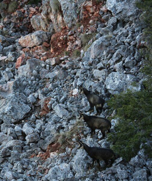 Hármasban a biztonságos sziklák között