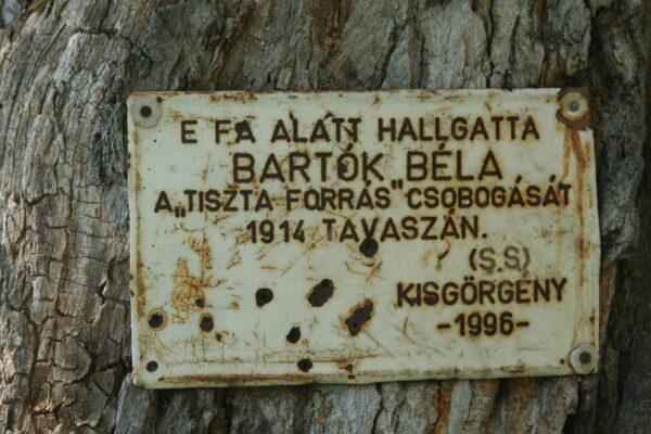 A kisgörgényi Bartók Béla-emléktábla a vén körtefán
