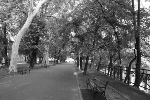 A park platánsora